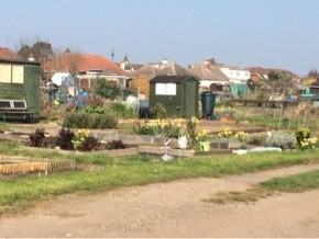Picture showing an allotment plot in Rocheway